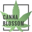 Canna Blossom