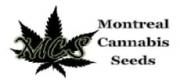 Montreal Cannabis Seeds